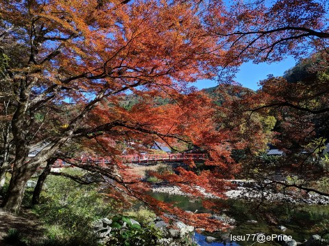 【10 月手機攝影得獎公告】10 張秋天面貌千變幻化的分享