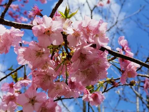 【3 月攝影公告】十種春景讓人眼花撩亂 - 11