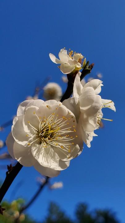 【3 月攝影公告】十種春景讓人眼花撩亂 - 7