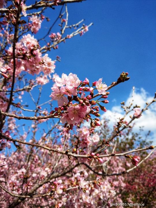 【3 月攝影公告】十種春景讓人眼花撩亂 - 8