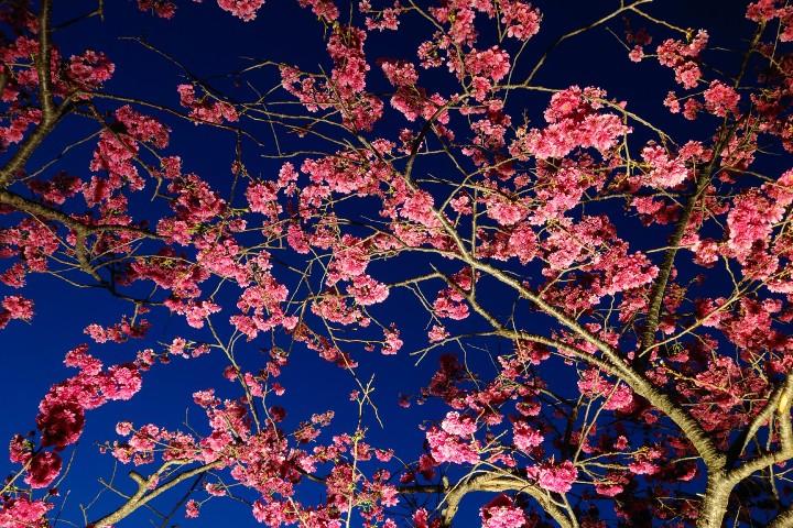 【3 月攝影公告】十種春景讓人眼花撩亂 - 5